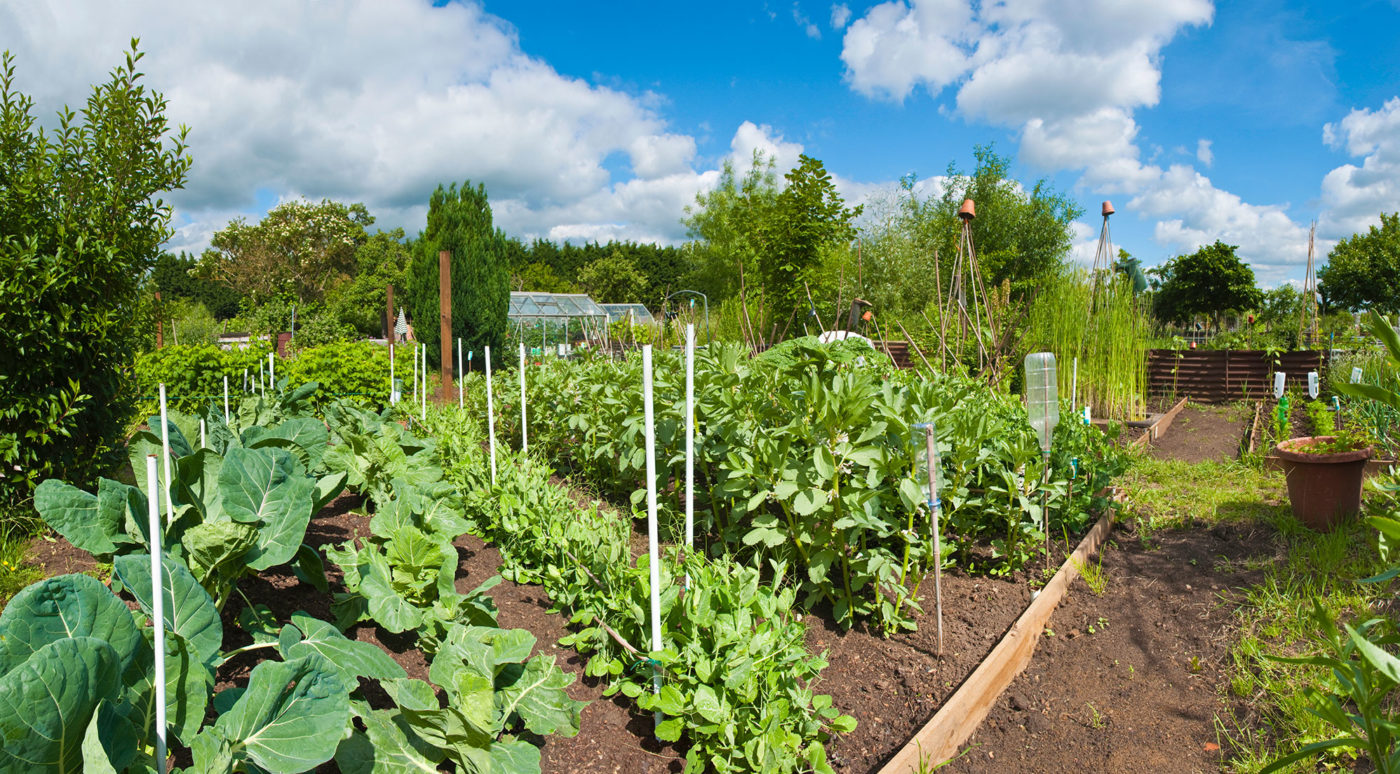 Sustainable Living Community Garden